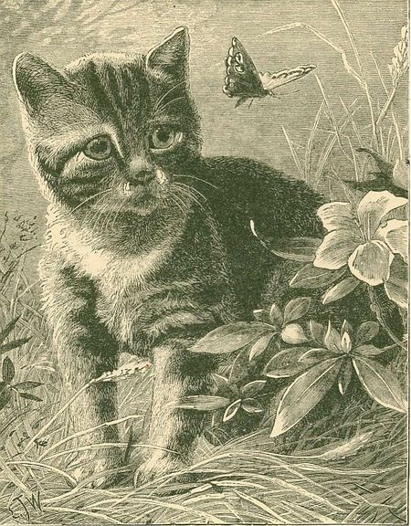 Engraving cat butterfly irfan