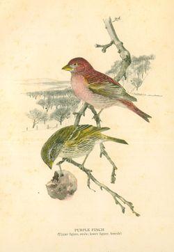 Bird images_2