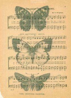 Butterflies on music