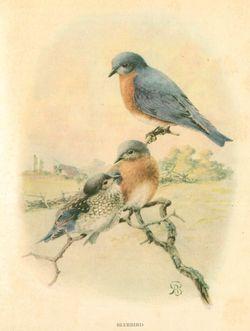 Bird images_1