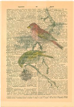 Purple finch on dictionary
