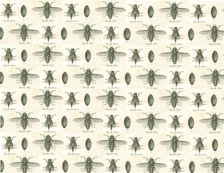 French bug pattern 2